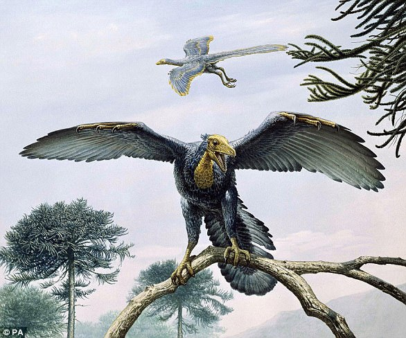 Artist's impression of Archaeopteryx. A new analysis of the oldest and most complete specimen ever found has shed fresh light on the enigmatic animal - and found it was somewhere in between a dinosaur and a bird