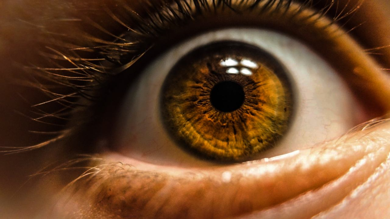 New kind of cell in the eye that perceives brightness discovered by researchers