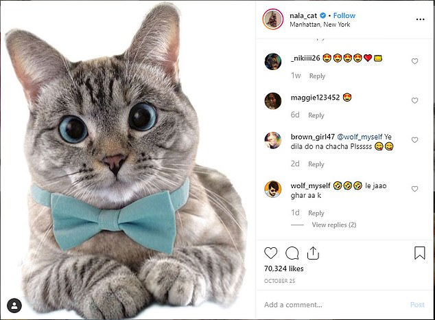 Trend:Sites with cute cat shots have new rivals