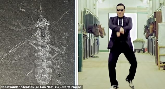 The Buccinatormyia gangnami was doing it 'Gangnam Style' before PSY even released his first demo