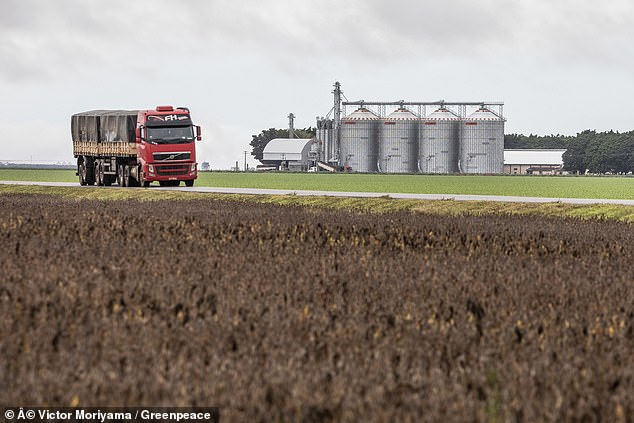 A direct correlation between chicken consumption in the UK and deforestation in South America is not proven, but Greenpeace claims there is a definite link as the soya farms (pictured) are expanding to meet rising demand in the UK