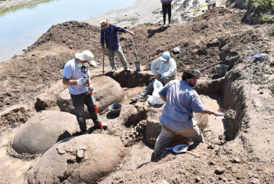 Pic Shows: The remains of glyptodont; An Argentine farmer has found the 20,000-year-old remains of four prehistoric armadillos that could grow to the size of a Volkswagen Beetle at the bottom of a dried-out riverbed.